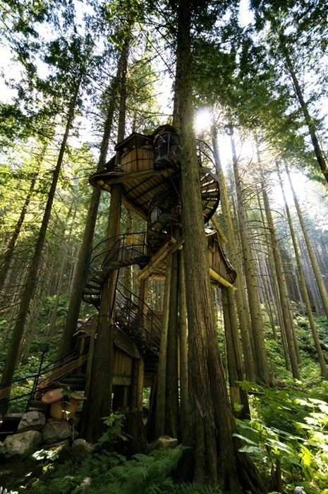 tree house Forest architecture design destination WIN! g rated - 7102275840