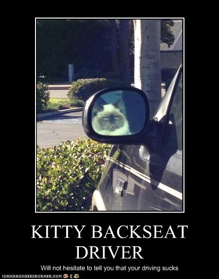 KITTY BACKSEAT DRIVER Will not hesitate to tell you that your driving sucks