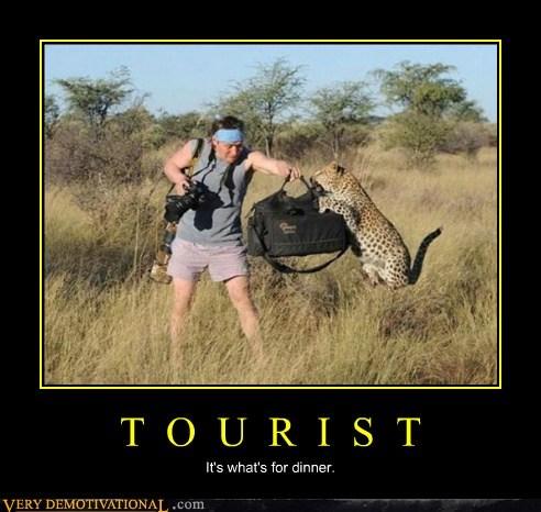 tourist,leopard,uh oh