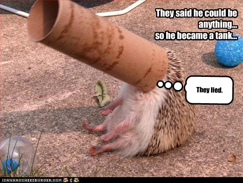 they said i could be anything lied tank hedgehogs