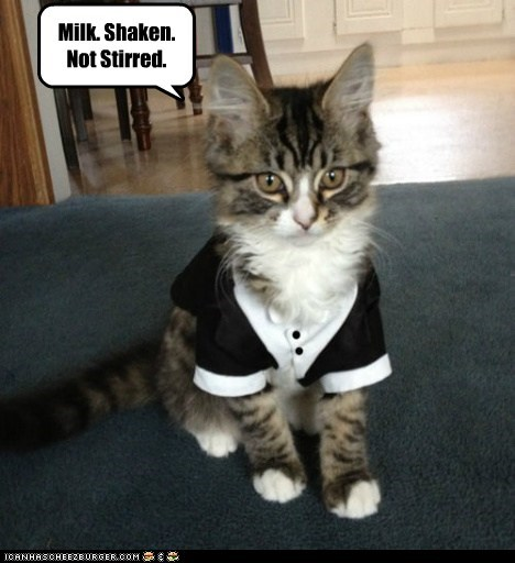 costume,kitten,james bond,Cats