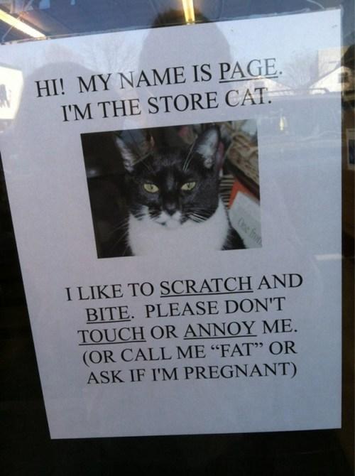 sign shop Cats - 7104284160