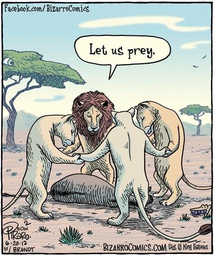 lions prey pray - 7104323328