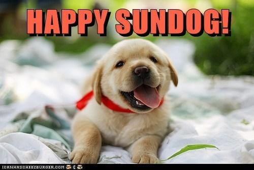 dogs puppies Sundog golden retriever - 7104657664