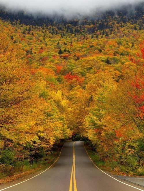 autumn trees pretty colors tunnel road trip - 7104739072