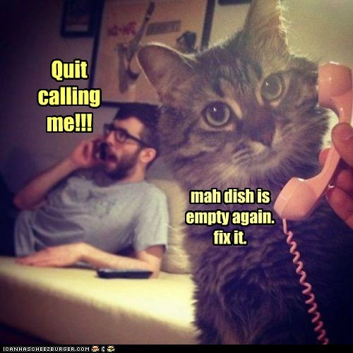 call phone humans Cats - 7104944128