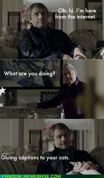 captions Sherlock Cats - 7104945664