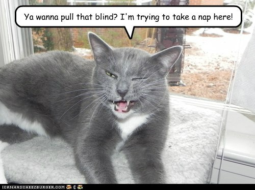Ya wanna pull that blind? I'm trying to take a nap here!