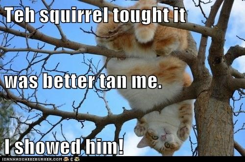 Teh squirrel tought it was better tan me. I showed him!