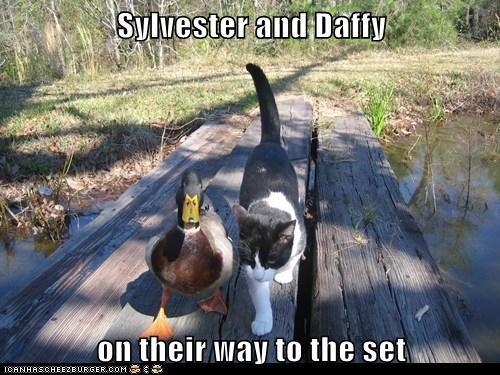 sylvester,ducks cats,looney tunes,daffy,set