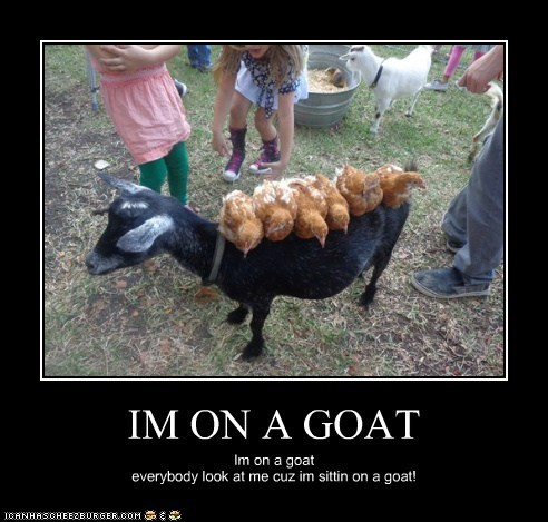 the lonely island chickents Song Parody goats i'm on a goat