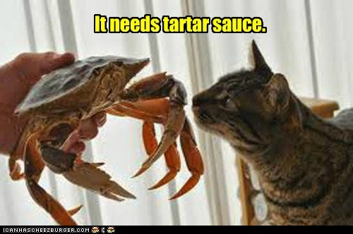 complaining,crabs,food,tartar sauce,Cats,picky eater