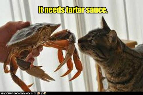 crabs food Cats - 7107120640