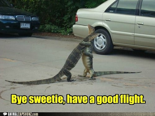 lizards,flight,hugs,trip