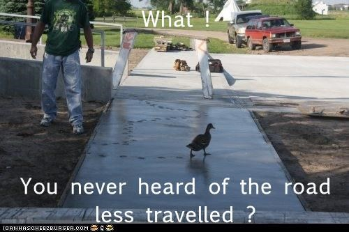 ducks,tracks,road less traveled,cement