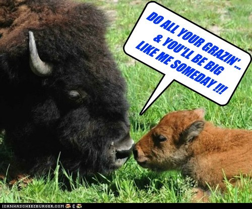 kids growing up bison grass - 7107909120