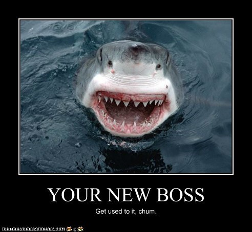 YOUR NEW BOSS Get used to it, chum.