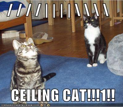 / / / / | | | | \ \ \ \   CEILING CAT!!!1!!