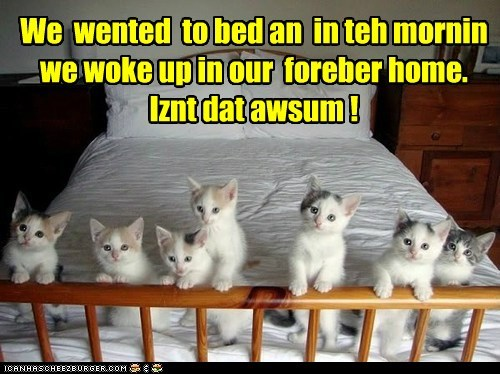 kitten,bed,Cats,home
