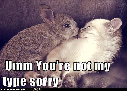 kitten love Cats rabbits - 7109035776