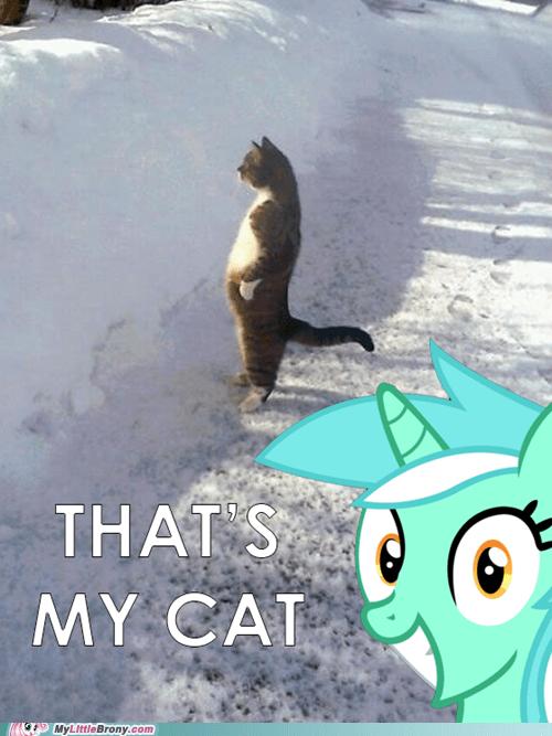 lyra standing cat Memes - 7109518080