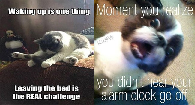 dogs wake up funny memes Memes cats are weird animal memes Cats - 7109637
