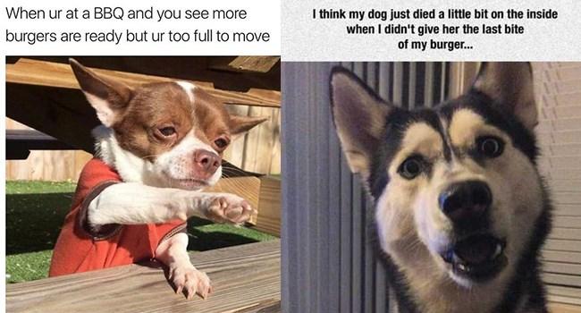 dogs dog memes funny memes hamburgers Memes animal memes - 7109893