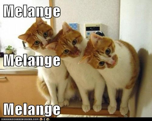 Cheezburger Image 7109935360