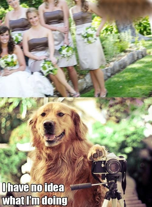 dogs photographers idiot - 7110096896
