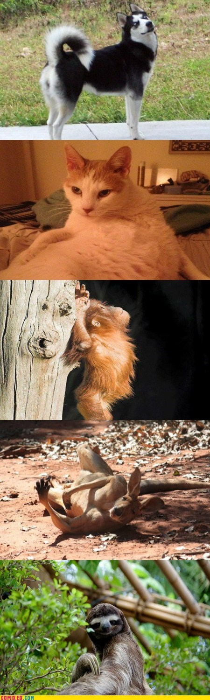 models cute animals - 7110747136