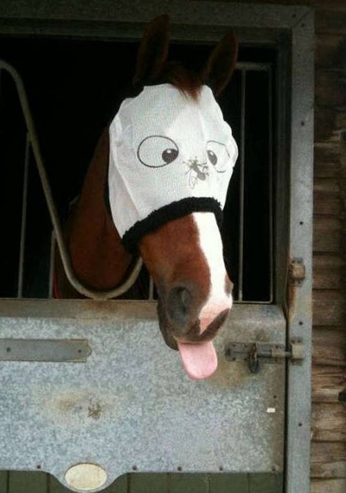 tongue blinder horses - 7111057408