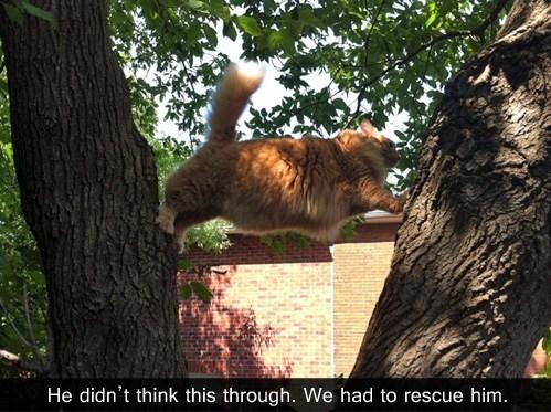 stuck dumb tree Cats - 7111103744