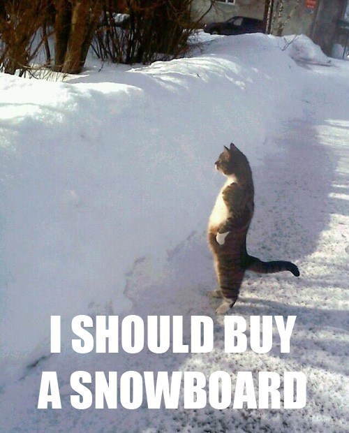 snow i should buy a boat winter Cats - 7111186944