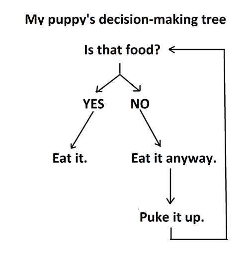 dogs pets puppy flowchart food