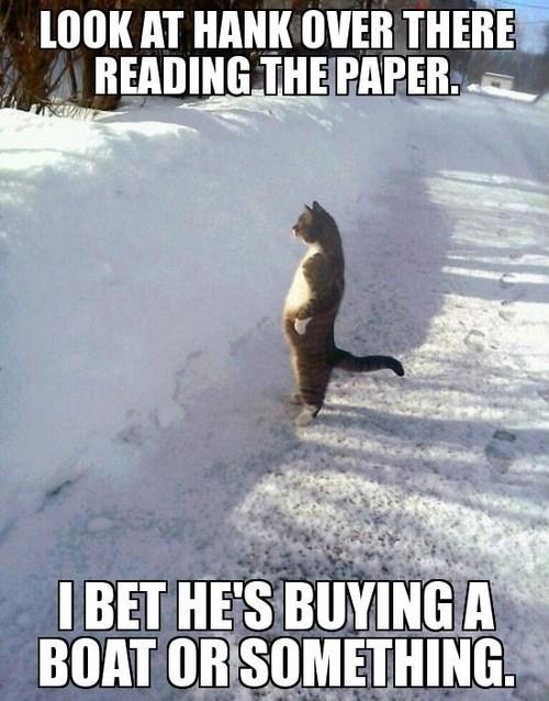 i should buy a boat winter Cats - 7111403520