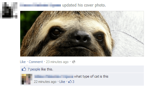 sloths Cats animals failbook g rated - 7111435776
