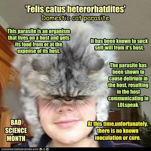 parasites human Cats - 7111461120