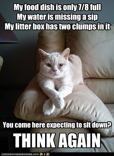 boss,litter box,food,Cats