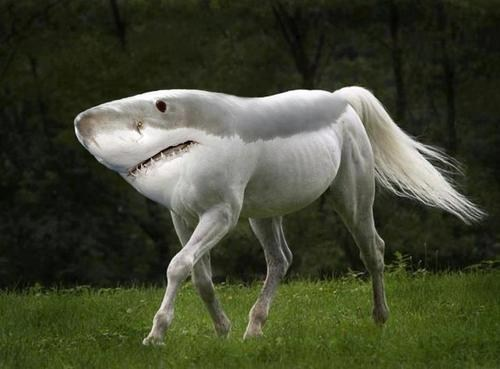 shopped pixels,has science gone too far,shark