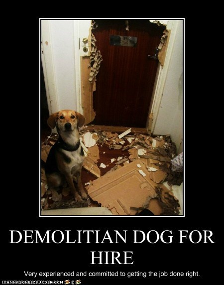 DEMOLITIAN DOG FOR HIRE Very experienced and committed to getting the job done right.