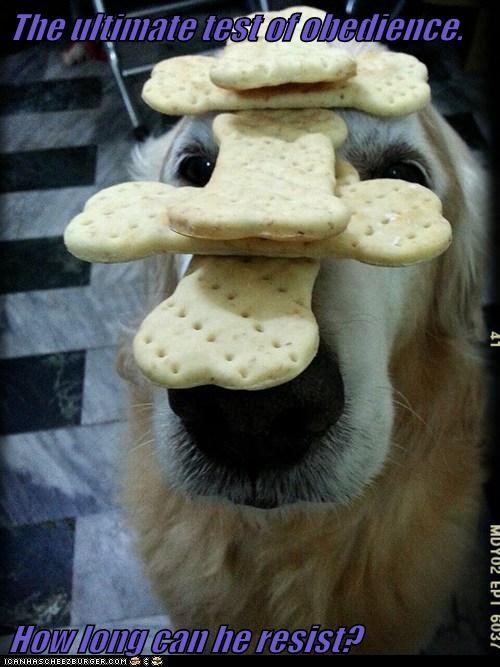 Cheezburger Image 7111595520