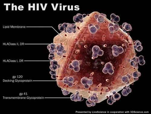 medicine virus science hiv - 7111671552