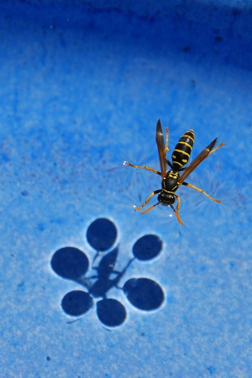 wasp surface tension phsyics science