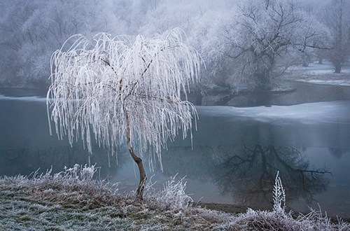 photography,winter,frozen,lake