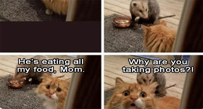 caturday cat memes | Animal - He's eating all my food, Mom. Why are taking photos?!