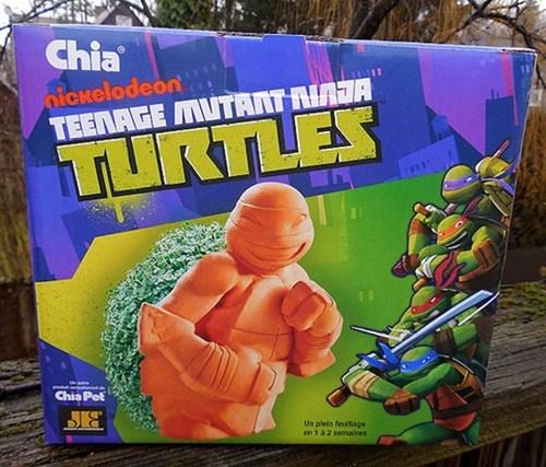 teenage mutant ninja turtles chia pets