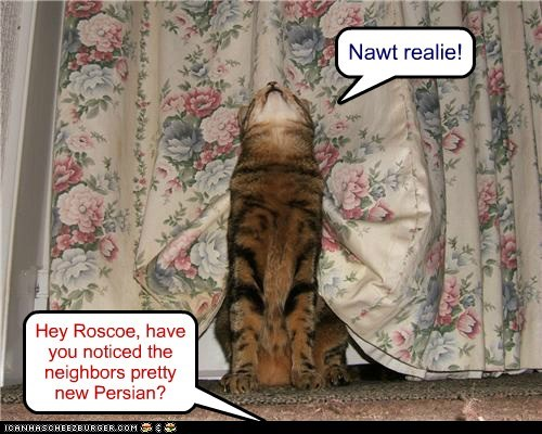 Hey Roscoe, have you noticed the neighbors pretty new Persian? Nawt realie!