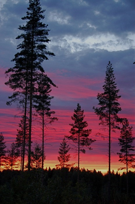 Forest landscape pretty colors sunset - 7112566784
