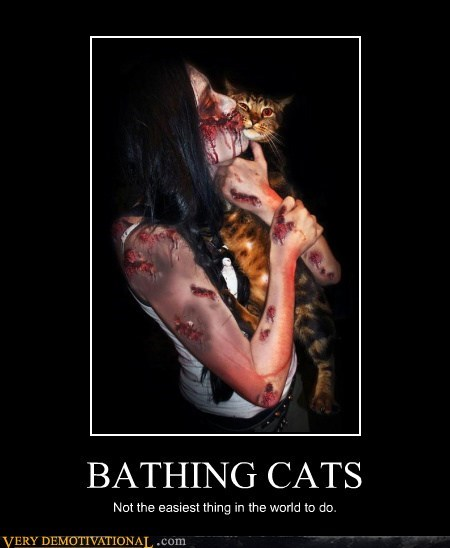 cat,bath,zombie,angry