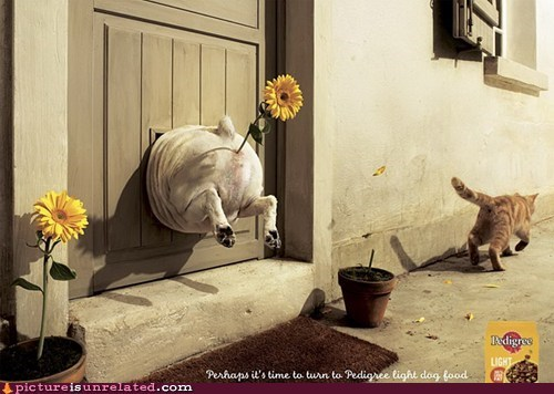 cat advertisement Flower dogs funny - 7113486336